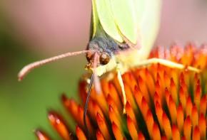 Schmetterling6