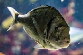 Fisch IMG_7318 (2)